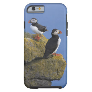 Atlantic Puffins (Fratercula arctica) on cliff Tough iPhone 6 Case
