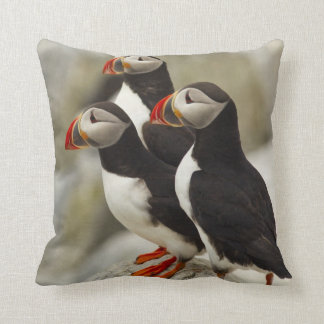 Atlantic Puffins on Machias Seal Island off the Cushion