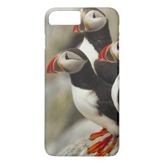 Atlantic Puffins on Machias Seal Island off the iPhone 8 Plus/7 Plus Case