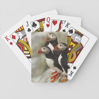 Atlantic Puffins on Machias Seal Island off the Playing Cards