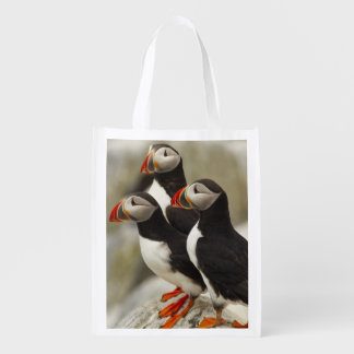 Atlantic Puffins on Machias Seal Island off the Reusable Grocery Bag