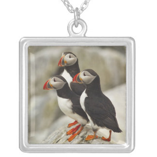 Atlantic Puffins on Machias Seal Island off the Silver Plated Necklace