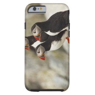 Atlantic Puffins on Machias Seal Island off the Tough iPhone 6 Case
