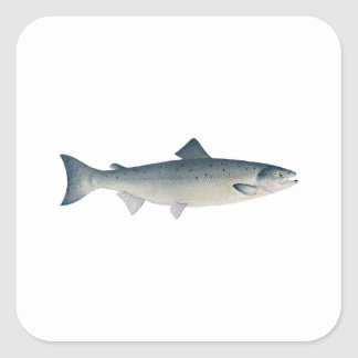 Atlantic Salmon Square Sticker
