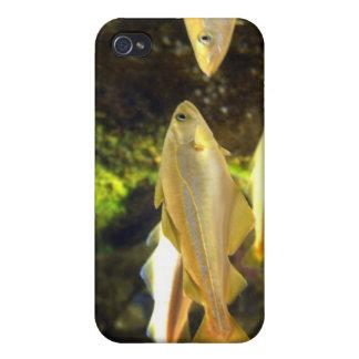 Atlantic Sea Bream Fish iPhone Case