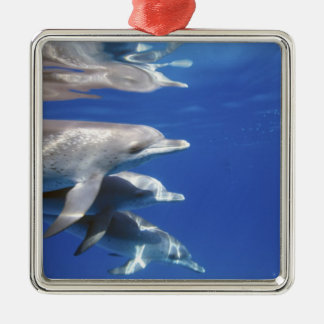 Atlantic spotted dolphins. Bimini, Bahamas. 10 Silver-Colored Square Decoration