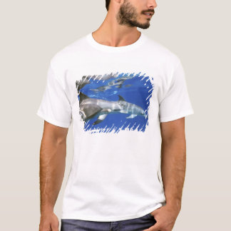 Atlantic spotted dolphins. Bimini, Bahamas. 11 T-Shirt