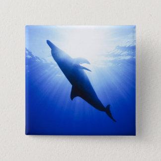 Atlantic spotted dolphins. Bimini, Bahamas. 2 15 Cm Square Badge