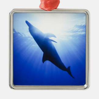 Atlantic spotted dolphins. Bimini, Bahamas. 2 Silver-Colored Square Decoration