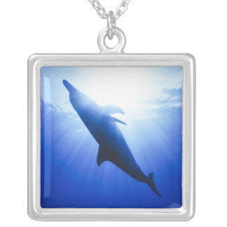 Atlantic spotted dolphins. Bimini, Bahamas. 2 Silver Plated Necklace