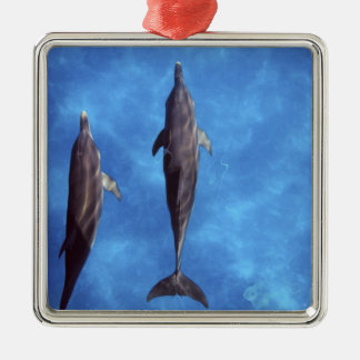 Atlantic spotted dolphins. Bimini, Bahamas. 3 Silver-Colored Square Decoration