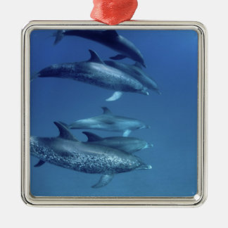 Atlantic spotted dolphins. Bimini, Bahamas. 5 Silver-Colored Square Decoration