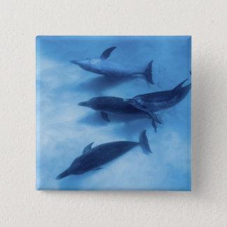 Atlantic spotted dolphins. Bimini, Bahamas. 7 15 Cm Square Badge