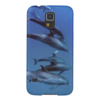 Atlantic spotted dolphins. Bimini, Bahamas. Galaxy S5 Cover