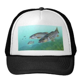 Atlantic Striped Bass Fish Morone Saxatilis Trucker Hats