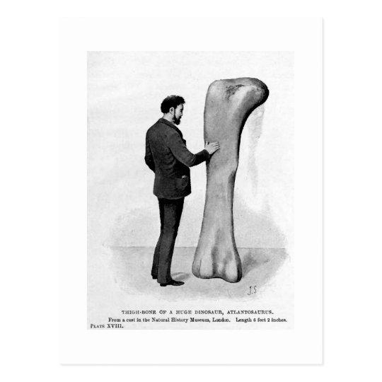 Atlantosaurus thigh-bone art postcard
