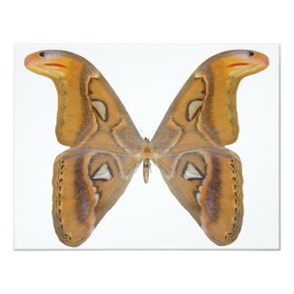 Atlas Butterfly 11 Cm X 14 Cm Invitation Card