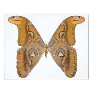 Atlas Butterfly 11 Cm X 14 Cm Invitation Card