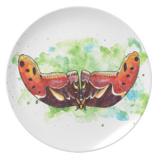 Atlas moth dinner plates