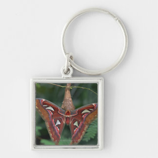 Atlas moth Silver-Colored square key ring