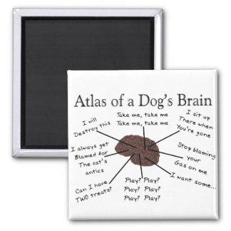 Atlas of a Dog s Brain Refrigerator Magnet