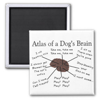 Atlas of a Dog's Brain Square Magnet
