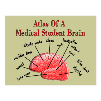 Atlas of Medical Student Brain Postcard