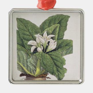 Atropa mandragora christmas ornament