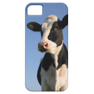 Attentive cow iPhone 5 cases