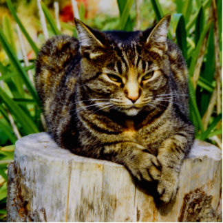 Attitude Cat Standing Photo Sculpture
