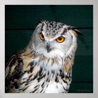 'Attitude' - Owl Poster
