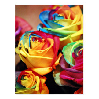 Attractive colourfull roses post cards
