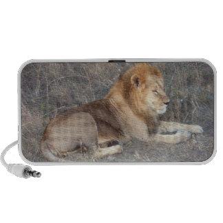 Audio loudspeaker lion