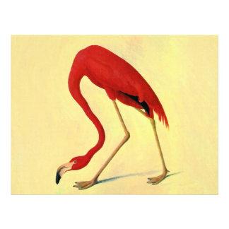 Audubon American Flamingo Painting Flyers