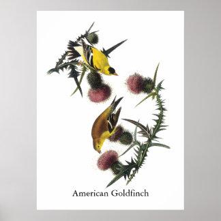 Audubon American Goldfinch Poster