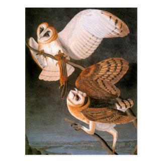 Audubon: Barn Owl Postcard