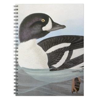 Audubon: Barrow's Goldeneye Note Books