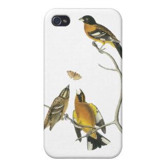 Audubon Black-headed Grosbeak iPhone 4/4S Covers