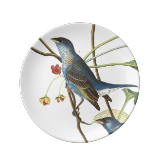 Audubon Bunting Bird Wildlife Porcelain Plate