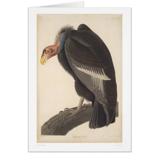Audubon California Vulture (2609A) Card
