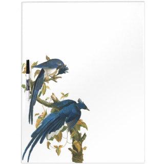 Audubon Columbia Jay Bird Wildlife Dry Erase Board