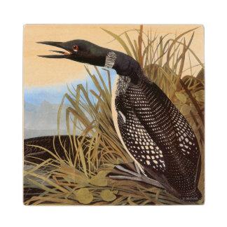 Audubon: Common Loon Wood Coaster