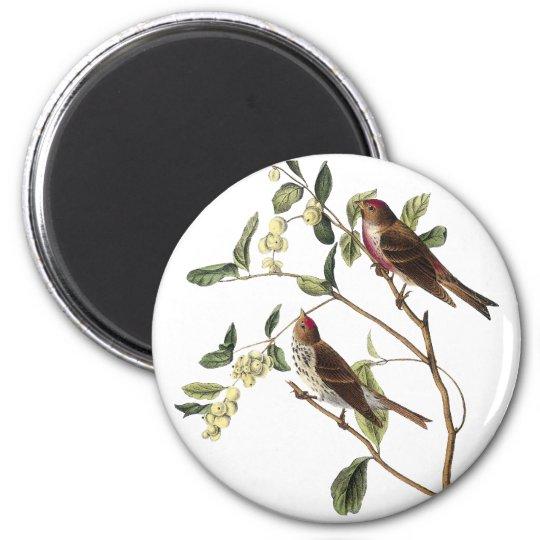 Audubon Common Redpole 6 Cm Round Magnet