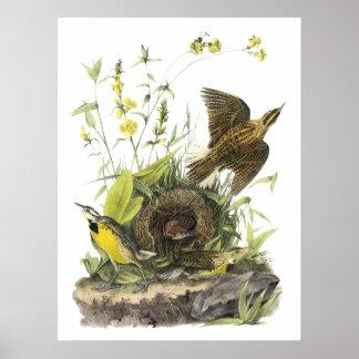 Audubon Eastern Meadowlard Poster