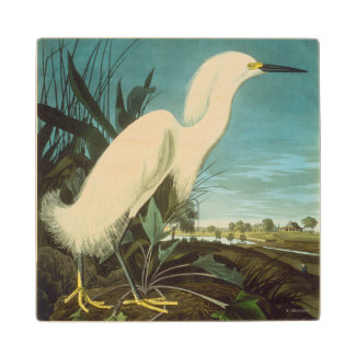 Audubon: Egret Wood Coaster