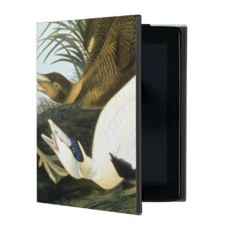 Audubon: Eider Duck Covers For iPad