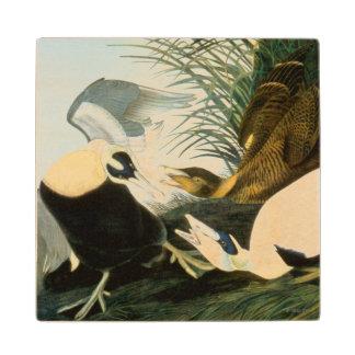 Audubon: Eider Duck Wood Coaster