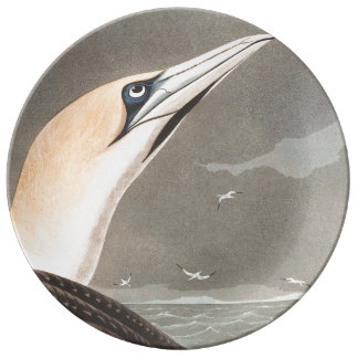 Audubon Gannet Bird Wildlife Porcelain Plate