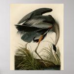 Audubon Great Blue Heron Birds