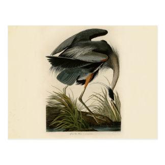 Audubon Great Blue Heron Birds Postcard